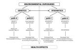 Introducing the epigene-environment framework
