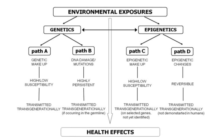 Introducing the epigene-environment framework